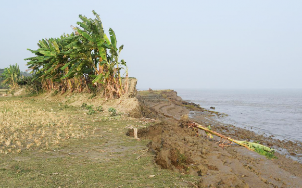 remains of eroded embankment wall in a rice field in Bangladesh